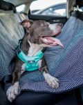 crash tested car safety harness for dogs