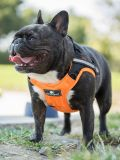 crash tested car safety harness for dogs can be used as a walking harness